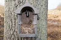 Nistkasten mit Kamera, die das Geschehen im Nistkasten auf einen Bildschirm übertragen kann. Bird Box, nest box with camera in the nesting box that can transfer pictures what is happening to a screen.