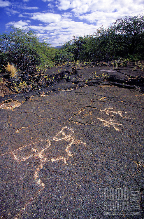 Well preserved Native Hawaiian petrogylphs on the hardened lava at the Kona Village Resort on the Big Island of Hawaii.