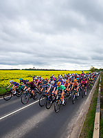 Picture by Alex Whitehead/SWpix.com - 04/05/2018 - Cycling - 2018 Asda Women's Tour de Yorkshire - Stage 1: Barnsley to Ilkley - The peloton in action.