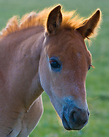 Wild Horse colt.