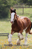 Bob, ANIMALS, REALISTISCHE TIERE, ANIMALES REALISTICOS, horses, photos+++++,GBLA4413,#a#, EVERYDAY
