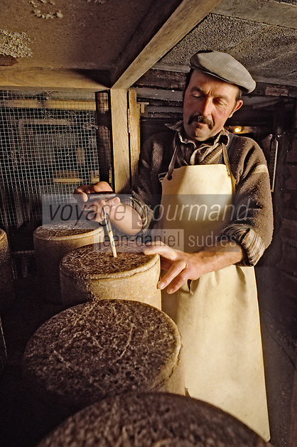 Europe/France/Auvergne/15/Cantal : Affinage du cantal fermier [Non destiné à un usage publicitaire - Not intended for an advertising use] [<br /> PHOTO D'ARCHIVES // ARCHIVAL IMAGES<br /> FRANCE 1980