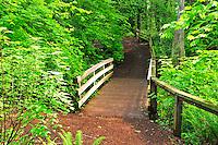 Wood trail bridge in Weowna Park, Bellevue WA