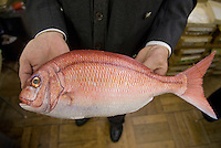 Maiduru president, Etsuji Isozaki, holds a plastic red snapper at Maiduru Corporation, Tokyo, Japan, 22nd December 2008. Maiduru corporation makes highly realistic plastic food for display in restaurant and cafe windows. .