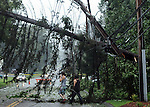 Two young men walk through the down tree with power lines mixed in,  on Route 30 in front of  Dobbs Crossing Apartments, Sunday, August 28, 2011, brought down during Hurricane Irene that caused widespread damage in Connecticut and a long the East Coast. (Jim Michaud/Journal Inquirer).