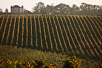 Vignoble Du Grand Sud-Ouest - South West France Vineyard