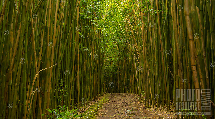 Bamboo Path: A path to the unknown, a road less traveled; bamboo forest lines this pathway in Hana, Maui.