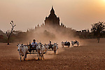 Carts pulled on a dusty field, Bagan, Myanmar