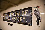 The underground subway stop for the Museum of Natural History in New York City, New York, USA