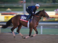 Real Solution , trained by Chad Brown, trains for the Breeders' Cup Turf at Santa Anita Park in Arcadia, California on October 30, 2013.