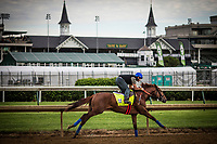 LOUISVILLE, KY - MAY 03: Gunnevera has a final workout at Churchill Downs on May 03, 2017 in Louisville, Kentucky. (Photo by Alex Evers/Eclipse Sportswire/Getty Images)