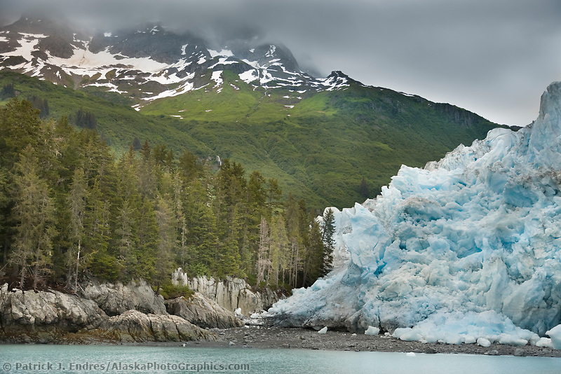 Meares glacier showing signs of glacial advance as it encroaches upon trees on the shore. Unakwik Inlet, Prince William Sound, southcentral, Alaska.