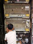 Bird-seller in China town, Kuala Lumpur