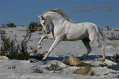 Bob, ANIMALS, collage, horses, photos(GBLA740,#A#) Pferde, caballos