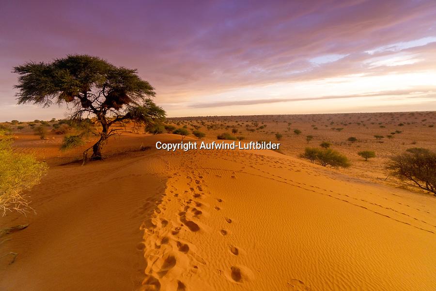 Kalahari: NAMIBIA, AFRIKA, 3.12.2019: Kalahari