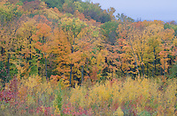 The hillside and cliff forest on the south Ellison Bay shore turns color in autumn, Grand View Landtrust Park, Door County, Wisconsin