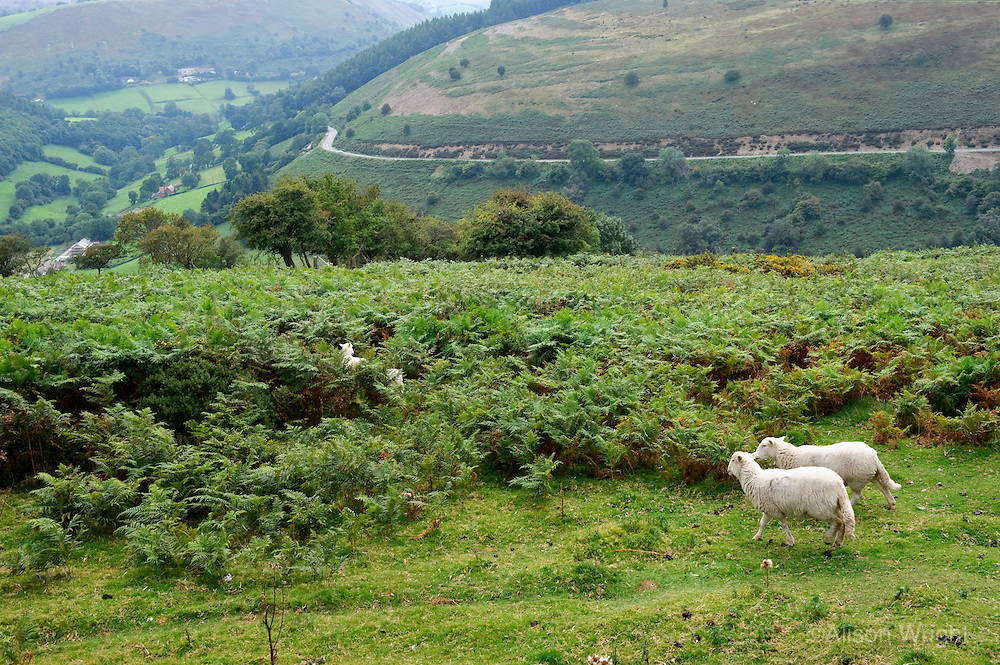 Welsh border, Horshoe pass.