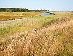 Cattle grazing on marshland wetland pasture, River Deben floodplain, Ramsholt, Suffolk, England, UK
