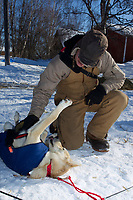 "Volunteer pilot Dale Looney scratches an itch on  ""Alaska"" one of Ed Stielstra's dogs on Saturday afternoon at the Grayling checkpoint during Iditarod 2011"