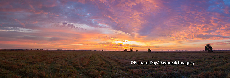63893-02620 Sunrise at Prairie Ridge State Natural Area, Marion County, IL