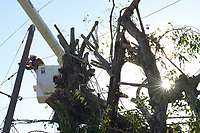 FPL contractor line specialists from DTE Energy repair smashed power poles and lines in a Coral Gables neighborhood near the University of Miami as power restoration work continues in the area Friday to repair damage from Hurricane Irma Sept 15, 2017  (Photo by David Adame/For FPL)