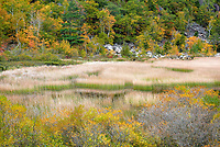 Fall Foliage in Acadia National Park
