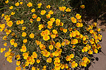 Flowers, Emiliana Organic Vineyards