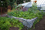 string beans, potatoes, pumpkins, beets and other vegetables in the vegetable garden next to the greenhouse.