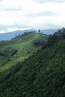 Armenia (Colombia)  paesaggio  Landscape