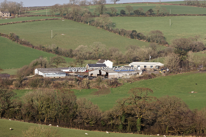 "Pictured: Penuwch Farm, owned by Richard Moseley, the owner of the cow that was stolen from David Aeron Owens in St Clears, Wales, UK. Wednesday 05 February 2020<br /> Re: Dyfed-Powys Police has become the first police force in the UK to use DNA evidence from a stolen cow in a criminal court case.<br /> The force used DNA from a £3,000 heifer, which had been retagged by a neighbouring farmer after escaping from a field, to prove it had been stolen.<br /> The blood samples were compared against cows on the victim's farm to prove a familial link and secure a conviction.<br /> David Aeron Owens, of Salem Road, St Clears, pleaded guilty to theft at Swansea Crown Court on Monday, February 3.<br /> PC Gareth Jones, officer in case, said: ""This has been a long and protracted enquiry, and it has taken a lot of work and patience to get to this point.<br /> ""Without the use of the heifer's DNA we would not have been able to prove that it had been stolen by Mr Owens, and that he had tried to alter identification tags to evade prosecution.<br /> ""We are proud to be the first force in the UK to use a cow's DNA in a criminal case, and will continue to use innovative methods to get justice for victims.""<br /> The investigation started in December 2017, when a farmer in St Clears reported the theft of one of his 300 cows which had escaped from his field four months earlier.<br /> Mr Owens had denied the missing animal was on his land, but the victim recognised it among the herd.<br /> PC Jones visited the farm and was handed a cow passport, listing ear tag numbers for the cow in question and the animal Mr Owens alleged was its mother.<br /> PC Jones applied for a warrant to seize the stolen cow, which was separated from the herd and had blood samples taken for DNA comparison."