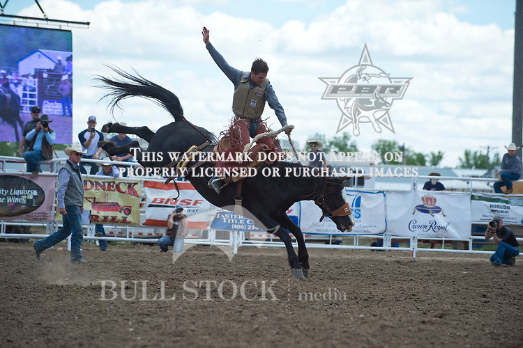 Chance Darling rides Stan Headings #277 for a stock score of 77 at the Fraturity Bucking Horse ABHR event in Miles City MT.  Photo by Josh Homer/Bull Stock Media.