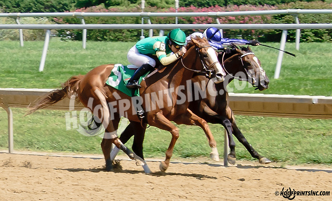 Jolene winning at Delaware Park on 8/14/14