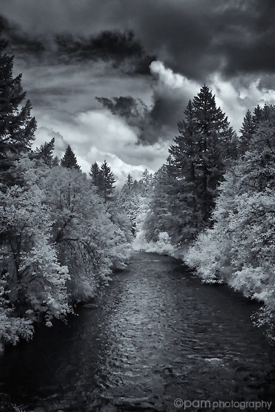 Black and white image of river and trees