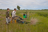 Sedge cutting on Sutton Fen RSPB Reserve, Norfolk, UK