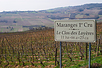 vineyard le clos des loyeres dezize les maranges santenay cote de beaune burgundy france