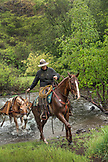 USA, Oregon, Joseph, Cowboy Cody Ross rides though Big Sheep Creek after moving cattle in the rain, Northeast Oregon