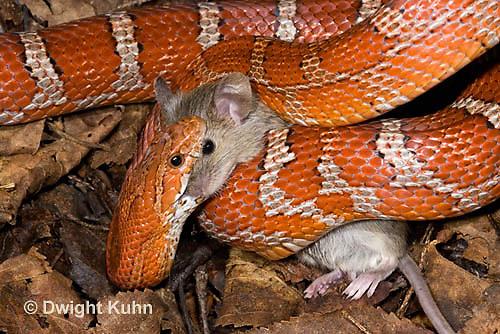 1R22-635z jpg | Kuhn Photo