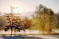 Sunrise and Fog, Sammamish State Park, Washington
