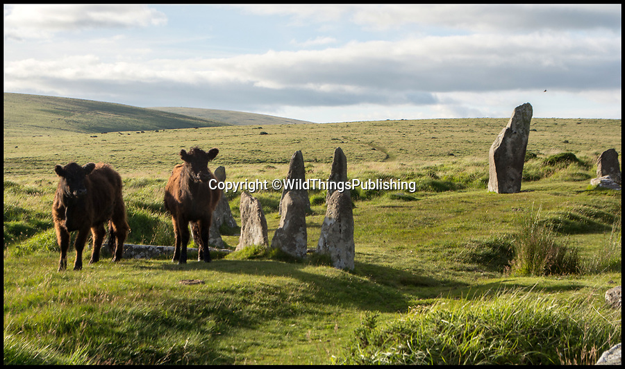 BNPS.co.uk (01202 558833)<br /> Pic: RichardByles/WildThings/BNPS<br /> <br /> Scorehill sone circle on Dartmoor.<br /> <br /> Walk back in Time - new travel book reveals Britain's ancient places.<br /> <br /> An explorer has travelled the length and breadth of Britain to document over 400 mysterious little known ancient sites.<br /> <br /> Dave Hamilton ventured off the beaten track to uncover wild ruins which have stood for between 2,000 and 10,000 years.<br /> <br /> He avoided famous sites like Stonehenge, instead focusing on little-known lost ruins scattered across the country.<br /> <br /> His travels saw him encounter sacred tombs and caves, stone circles, Bronze Age brochs and Iron Age hillforts.