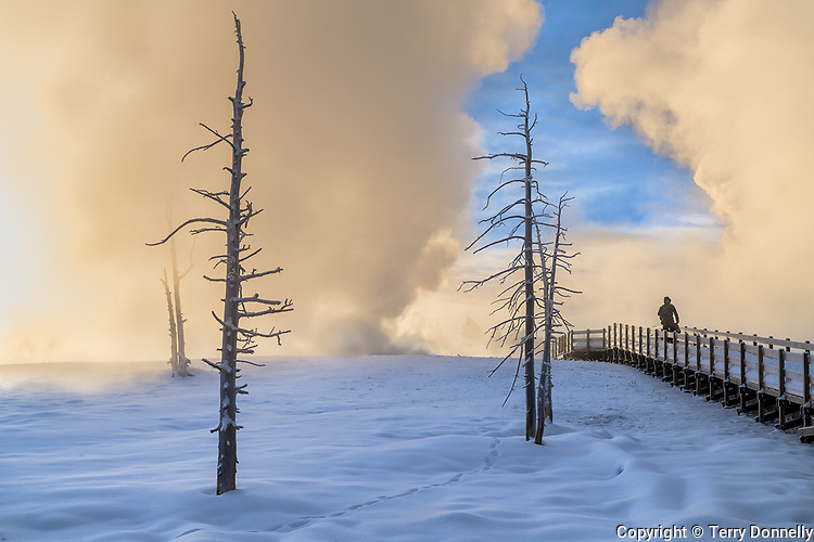 Yellowstone National Park, WY:<br /> Winter dawn sunrise illuminates the thermal steam in the Upper Geyser Basin