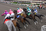 June 13 2010: The field leaves the gate in the Vanity Handicap at Hollywood Park..