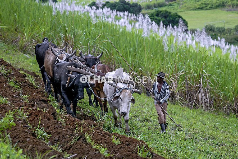 Preparaçao da terra e plantio da cana de acucar na Usina Catende. Catende. Pernambuco. 2004. Foto de Ubirajara Machado.
