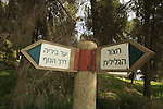 Isarael, Upper Galilee, Biria forest Scenic Route