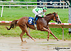 Jamie's Valentine winning at Delaware Park on 7/1/13