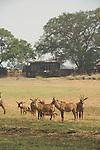 Troupeaux d'antilopes cheval devant Shumba lodge. Plaines de Busanga dans le parc national de Kafue. Zambie