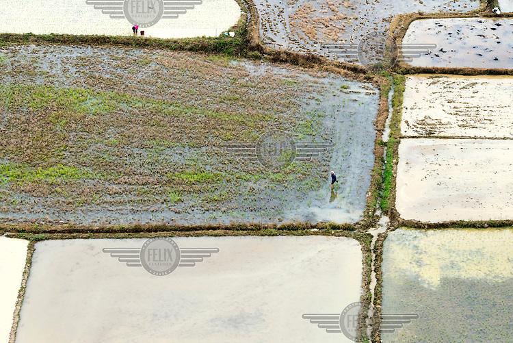 Women planting seedlings in rice paddy fields. /Felix Features