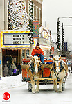 TORRINGTON, CT  12/31/00    1231CA11.tif    Rick Bunnell from Bunnell Farm of Litchfield, leads a pair of Belgium Draft horses while giving hayrides down Main Street in Torrington, for First Night celebration.<br /> PHOTO BY CRAIG AMBROSIO