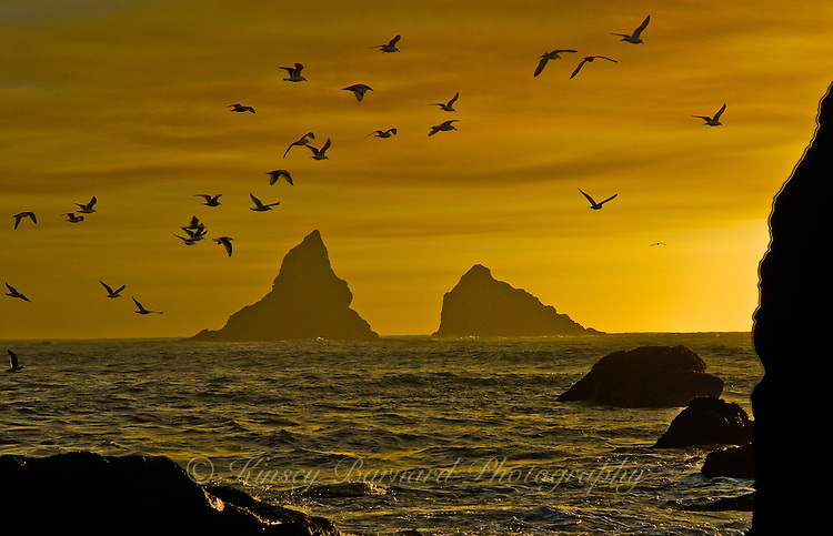 &quot;GOLD BEACH SUNSET&quot;<br />