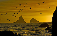 """GOLD BEACH SUNSET""<br />