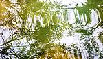 Tree reflections in water, Luang Prabang Province, Laos